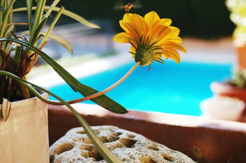 flower-128515_1280